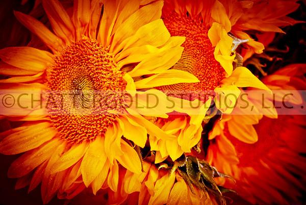 Photo 365:  Flower Power