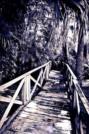 Photo 365:  Into the Jungle